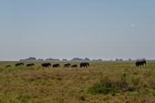 serengeti-paige-shaw-September 20, 2021-10