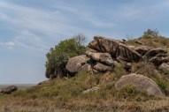 serengeti-paige-shaw-September 20, 2021-15