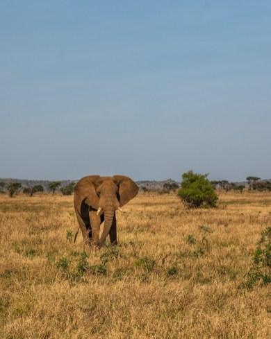 serengeti-paige-shaw-September 20, 2021-2