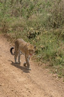 serengeti-paige-shaw-September 20, 2021-20