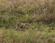 serengeti-paige-shaw-September 20, 2021-22