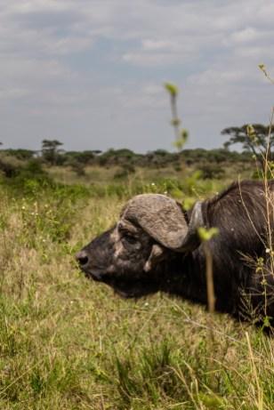 serengeti-paige-shaw-September 20, 2021-24