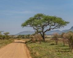 serengeti-paige-shaw-September 20, 2021-7
