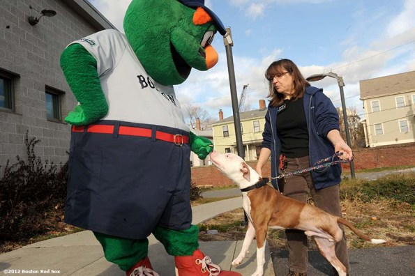 """""""Wally the Green Monster feeds a dog at the MSPCA in Boston, Massachusetts Wednesday, December 5, 2012. The Boston Red Sox visited the MSPCA to donate 1,000 bags of Fenway Park dog treats as part of the Red Sox 12 days of Christmas community acts."""""""