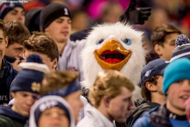 """""""Fans cheer during a high school football game between Xaverian Brothers High School and St. John's Preparatory School at Fenway Park in Boston, Massachusetts Wednesday, November 25, 2015."""""""