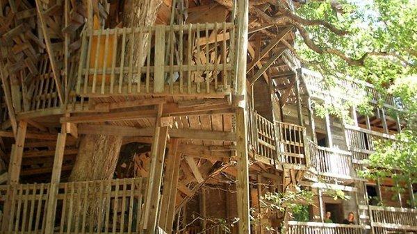 Самый большой дом на дереве (7 фото) » Интересные факты ...