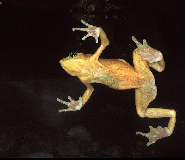 datiranje žaba ribnjak