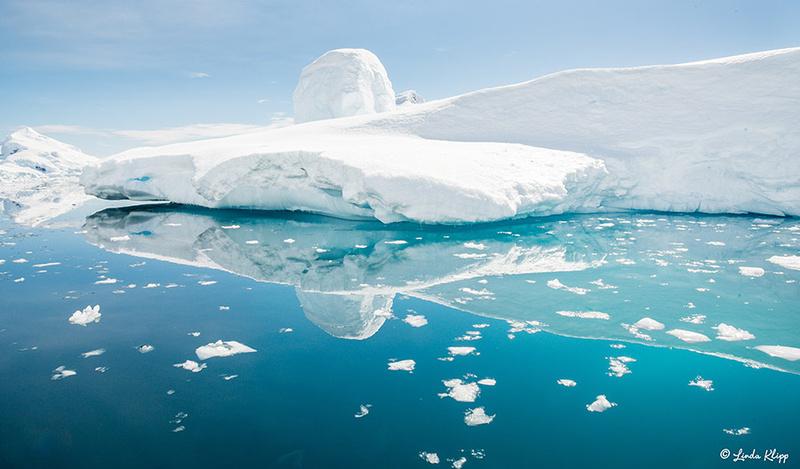 Zenfolio Wildlife Photography By Bill Klipp Antarctica