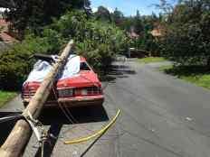 Utility Pole Planter Monte Carlo