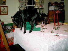 Sad News Bad Dog Sad News For Mascot Peewee