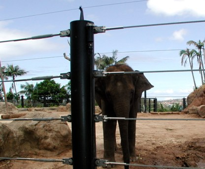 african_bull_elephant