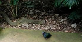 blue_and_green_bird