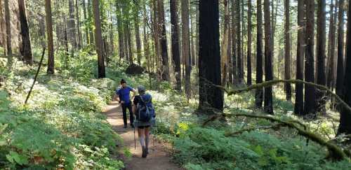 People walking on a path in a forest  Description automatically generated with low confidence
