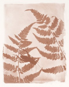 salted paper print detail