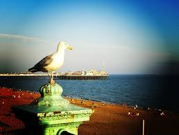 seagull on a brighton railing