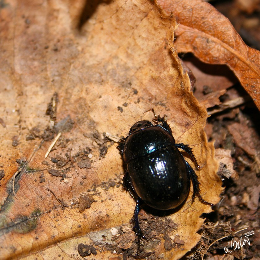 Autumn-Colours_beetle