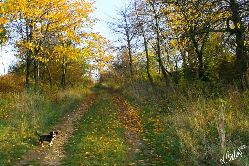 Slovakian_Autumn