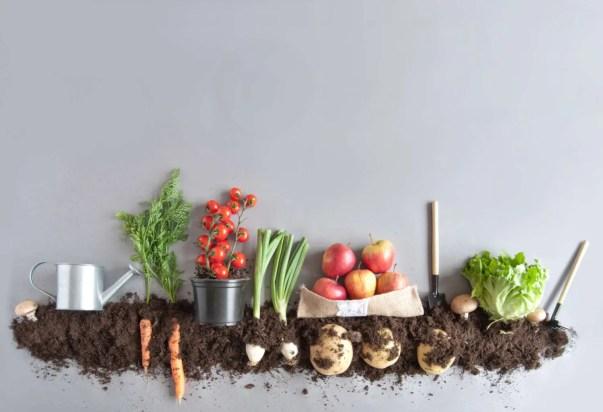 Vegetables & Soil