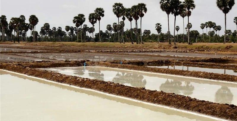 Marais salants de la région de Kampot