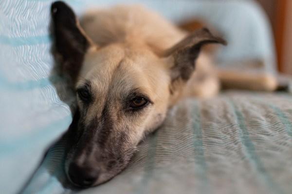 Drulleförsäkring - en soffa per hund.