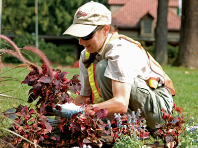 Horticulture Internship   Biltmore Browse Internship Openings
