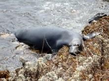 US 1 to Lompoc - Seal?