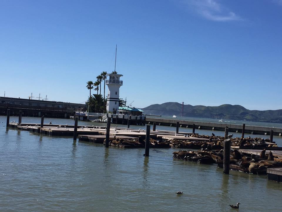 Leoni marini a San Francisco