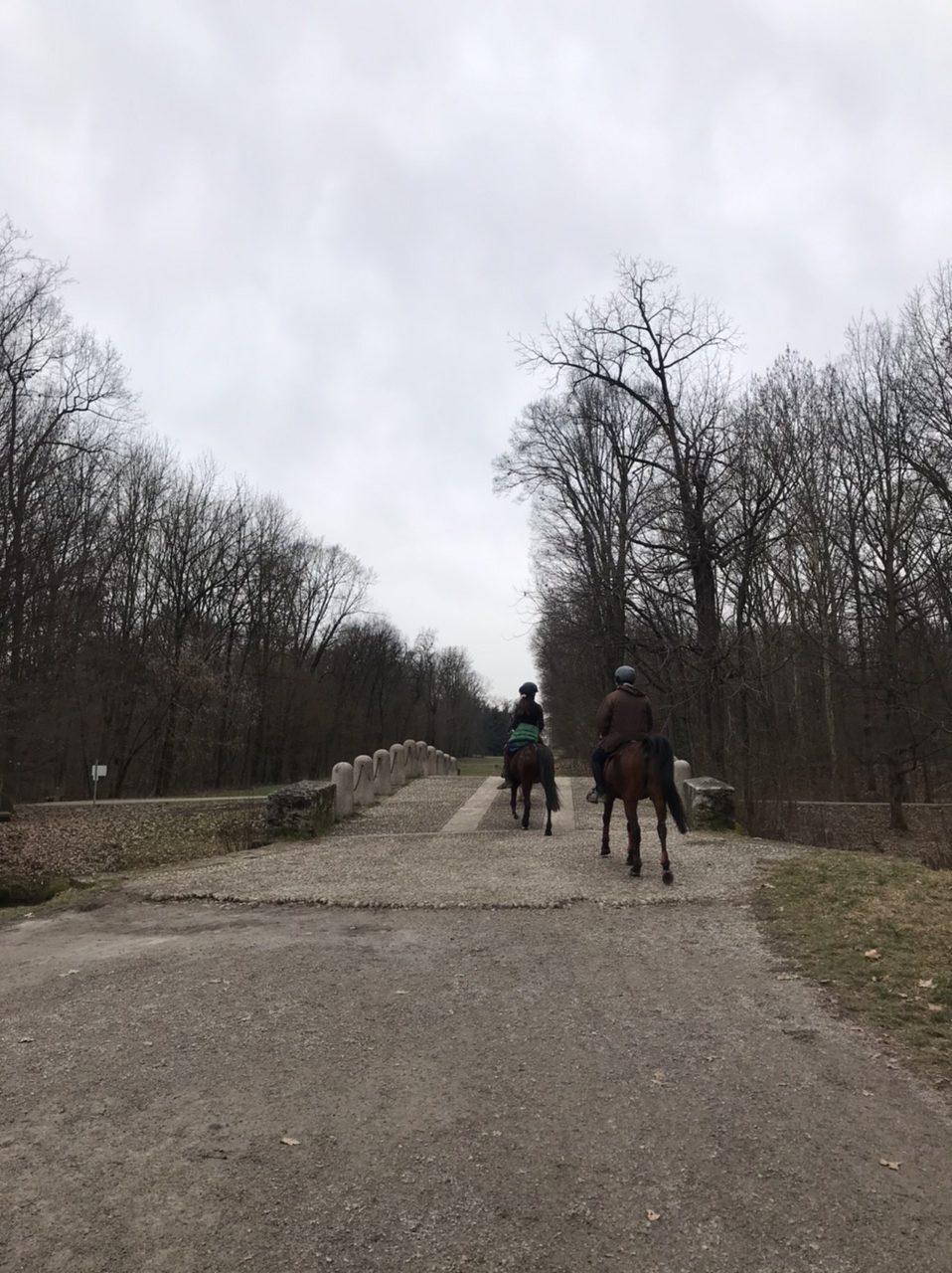 Cavalli al Parco di Monza