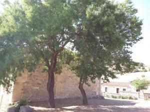 Santuario di Bonu Ighinu Sardegna