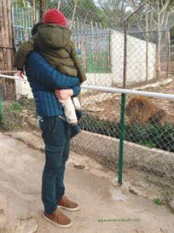 zoo di Tolone sul Mont Faron