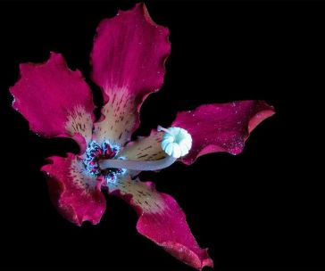 I-make-flowers-glow-to-photograph-their-invisible-light-58eb68cde4f30__880