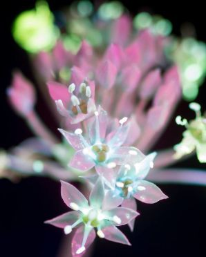 I-make-flowers-glow-to-photograph-their-invisible-light-58eb68def3d08__880