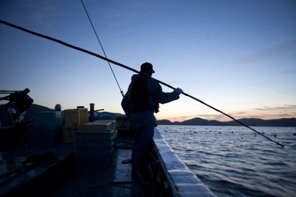 釣り好きの人必見!有名な食べられない魚一覧!
