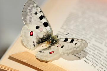 Los 7 libros que cambiarán tu vida