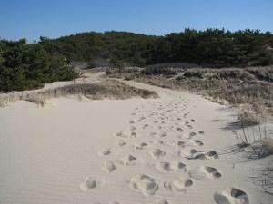 Great Island Trail, Wellfleet, Cape Cod
