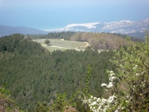 Foresta Umbra, Gargano, Puglia