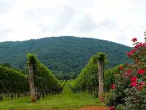 Afton Mountain offers stunning vineyard views.