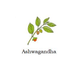 herb ashwagandha