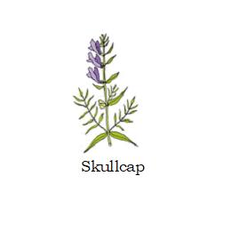 herb skullcap