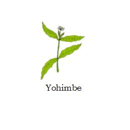herb yohimbe