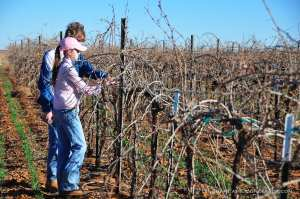 15.02.06_vineyard_027-web