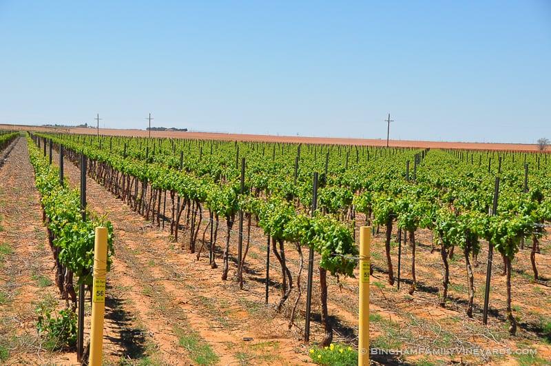 15.04.30_vineyards_057-web