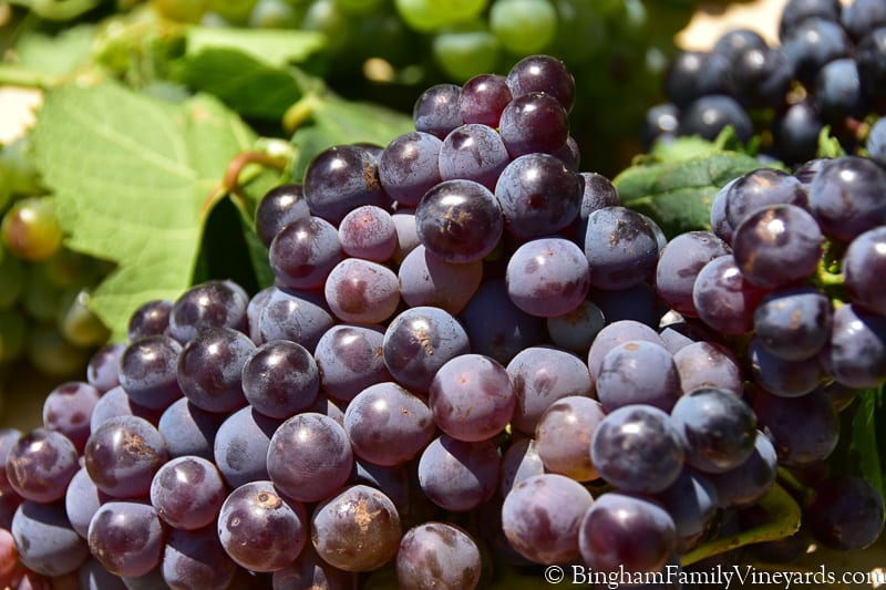 Texas High Plains Winegrowers Video