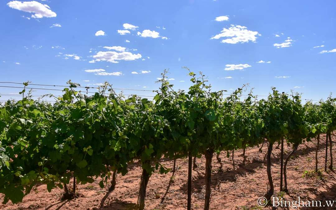 Vineyard Update for May 19, 2020