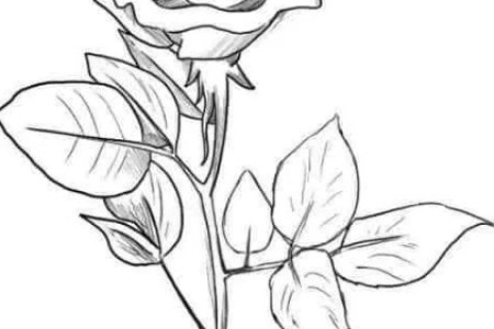 Gambar Sketsa Bunga Mawar Hitam Gambar Bunga Animasi Hitam Putih