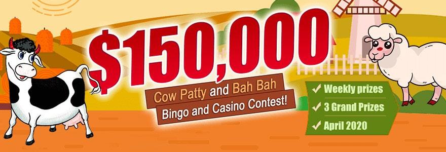 Amigo Bingo 150000 Cow Party