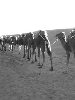 Dromedarritt in die Wüste