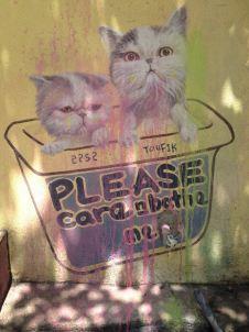 Katzen in Box in George Town