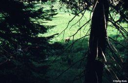 1995_Californien_16