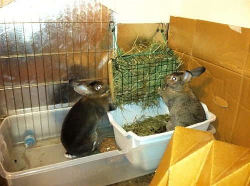 litter box hay rack references